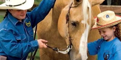 homepage-parallax-horses